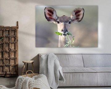 Kudu Frühstück von Angelika Stern