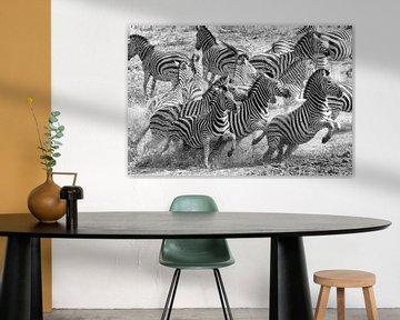 Zebra Flucht von Angelika Stern
