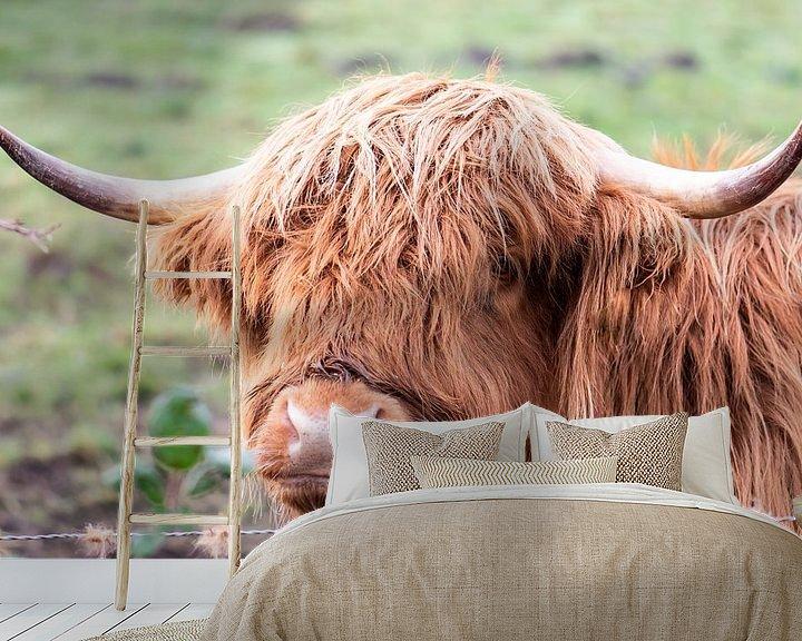 Beispiel fototapete: Schottische Highlander in der Nähe von Tania Perneel