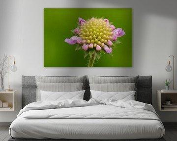 Blühende Krone. von Petra Vastenburg