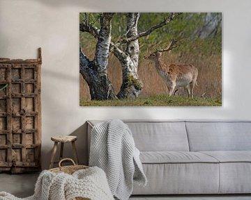 Damhert bij een boom van Petra Vastenburg