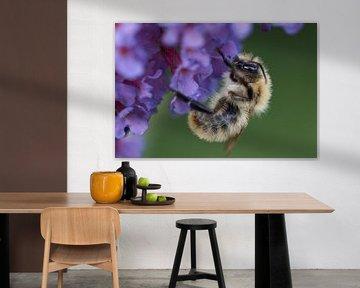 Hummel auf Blume des Schmetterlingsstrauches von Cor de Hamer