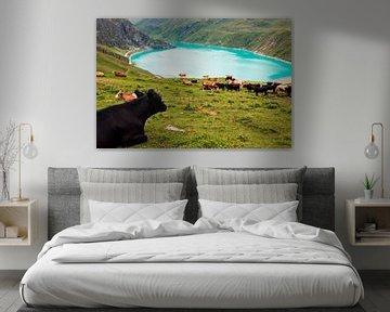 Koeien aan het stuwmeer van Moiry van Steven Van Aerschot