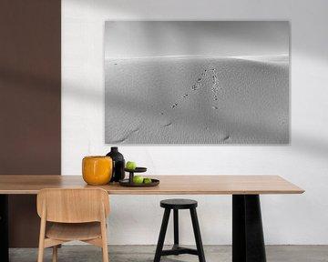 Sporen in de duinen van DuFrank Images