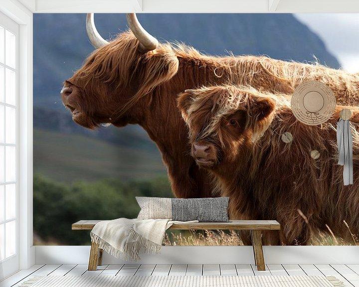 Beispiel fototapete: Kuh, Schottische Hochländer Porträt von Desiree Tibosch