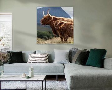 Kuh, Schottische Hochländer Porträt von Desiree Tibosch
