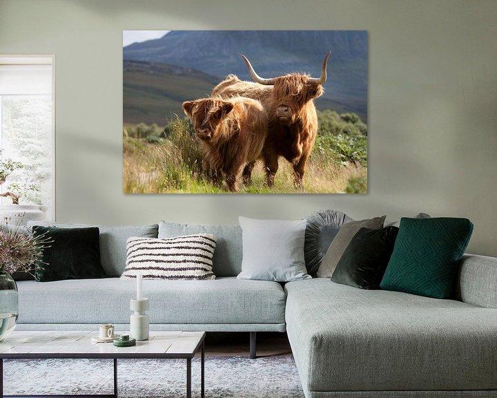 Beispiel: Kuh, Highlanders, Schottland von Desiree Tibosch