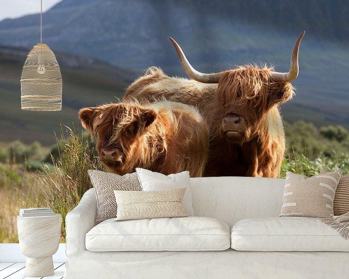 Beispiel fototapete: Kuh, Highlanders, Schottland von Desiree Tibosch