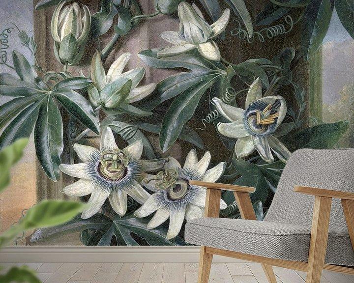 Beispiel fototapete: Die blaue Passionsblume, Philip Reinagle