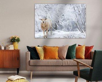 Ein Schaf im Wald im Schnee im Winter in Drenthe von Bas Meelker