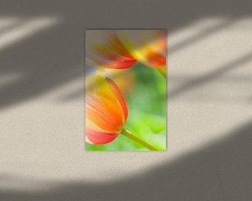 Nahaufnahme von schönen bunten Tulpen im Frühling von Bas Meelker