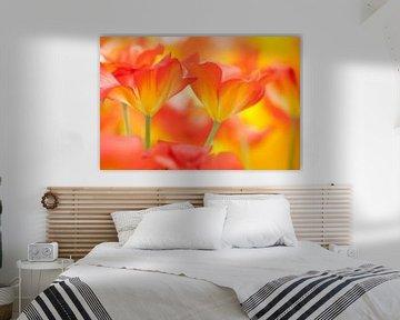 Schöne bunte Tulpen im Frühling. von Bas Meelker