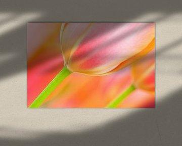 Tulpe im Frühling mit schönen Farben von Bas Meelker