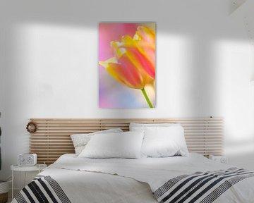 Tulpen im Frühling mit farbenfrohem Hintergrund von Bas Meelker
