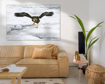 Stellers Seeadler auf Treibeis II von Harry Eggens