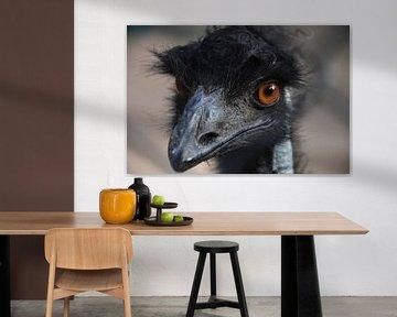 Emu aus nächster Nähe von Maurits Kuiper
