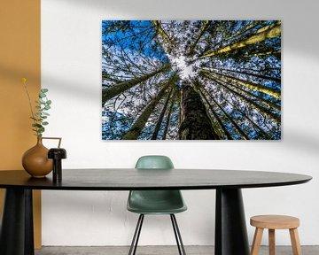 Bäume von Fred Leeflang