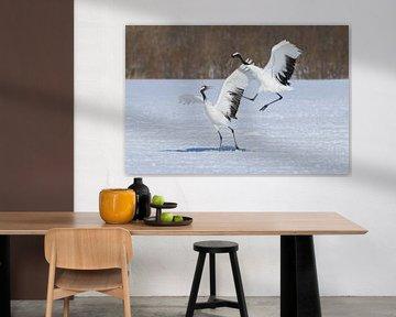 Japanse Kraanvogels VI van Harry Eggens