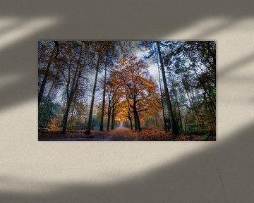 Barsch-Wald von Bart Uijterlinde