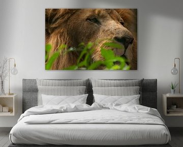 Löwen : Tierpark Amersfoort von Loek Lobel