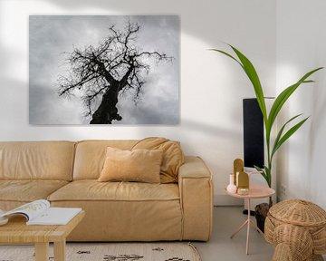 Baumsilhouette von Fred Leeflang