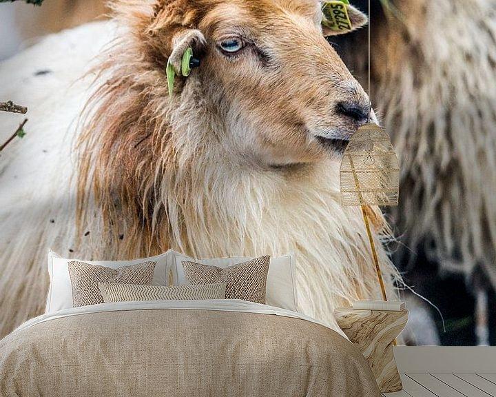 Beispiel fototapete: Schafe in der Kälte von Fred Leeflang