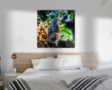Ozeanium : Tierpark Blijdorp von Loek Lobel