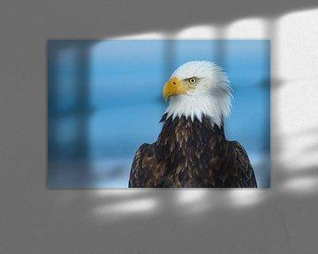 Amerikaanse Zeearend Portret van Harry Eggens