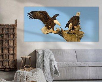 Zwei Weißkopfseeadler II von Harry Eggens