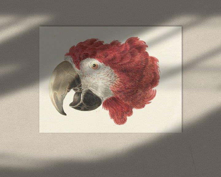 Beispiel: Kopf eines Aras, Aert Schouman