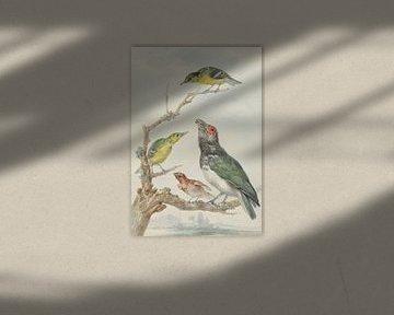 Vier verschiedene Vögel auf einem Ast, Aert Schouman