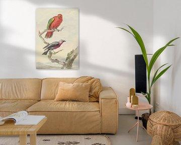 Zwei Vögel, darunter ein rot-grüner Papagei, Aert Schouman