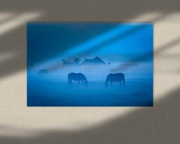 Weidende Pferde im Nebel bei Dorkwerd in Groningen von Evert Jan Luchies