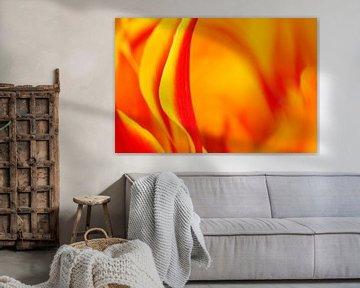 Tulpe von Elles Rijsdijk