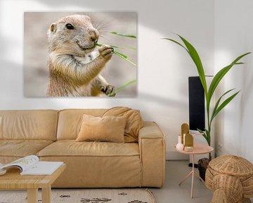 Präriehunde : Tierpark Blijdorp von Loek Lobel