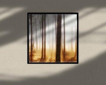 Zonnestralen door de bomen van Menno Bausch
