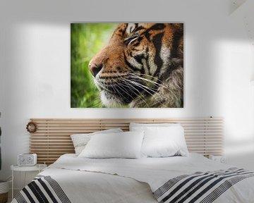 Sumatra Tiger : Blijdorp Zoo von Loek Lobel