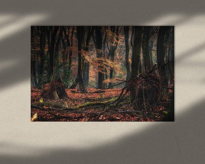 Sfeerimpressie: Mystiek oer bos op een vroege ochtend van Fotografiecor .nl