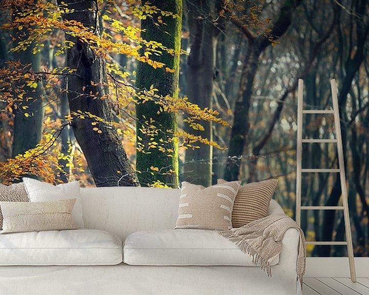 Sfeerimpressie behang: Herfstkleuren aan de bomen in het bos van Fotografiecor .nl