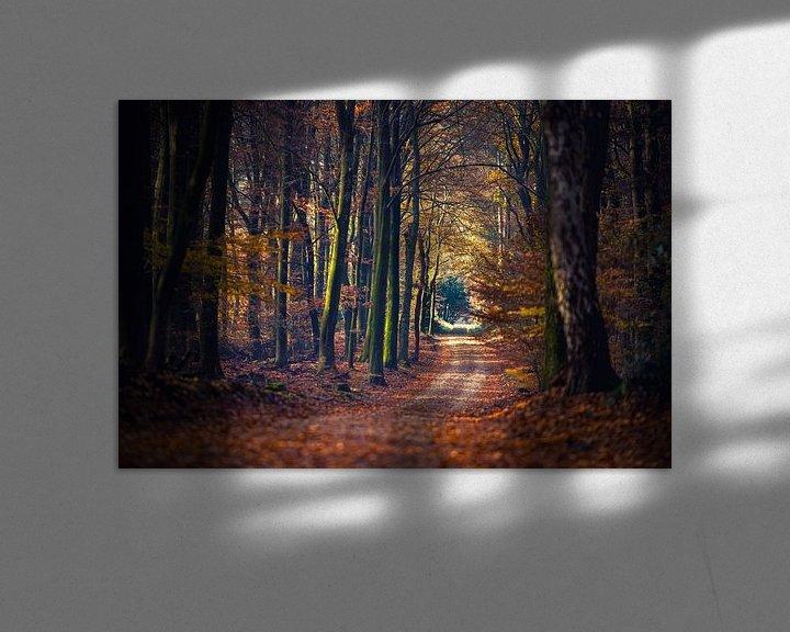 Sfeerimpressie: Wandelpad tussen de sfeervol  gekleurde herfstbomen van Fotografiecor .nl