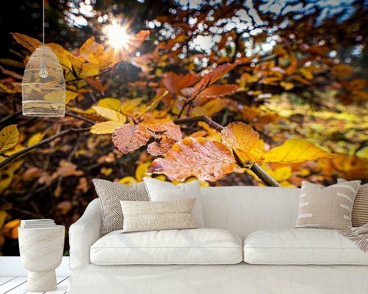 Sfeerimpressie behang: Kleurrijke herfstbladeren in het zonlicht van Fotografiecor .nl