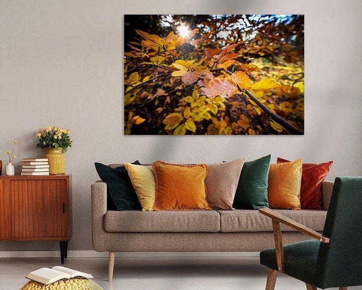 Sfeerimpressie: Kleurrijke herfstbladeren in het zonlicht van Fotografiecor .nl
