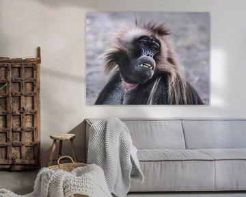 Gelada : Tierpark Blijdorp von Loek Lobel