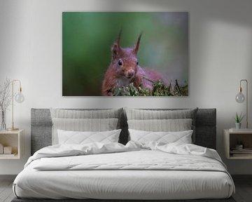 Eichhörnchen von Martin Linge