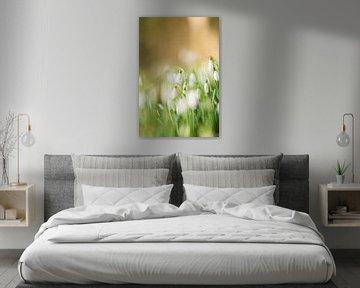 Sneeuwklokje (Galanthus) von KO- Photo
