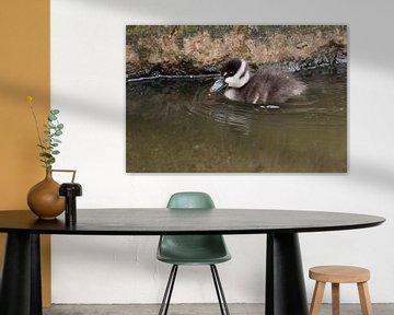 Enten usw. : Tierpark Blijdorp von Loek Lobel