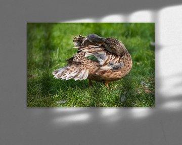 Schaufler : Tierpark Blijdorp von Loek Lobel