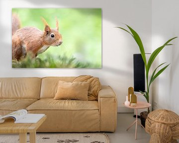 Rotes Eichhörnchen von Dirk van Doorn
