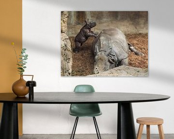 Spitzmaulnashorn : Tierpark Blijdorp von Loek Lobel