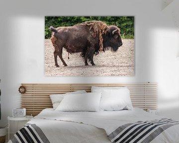 Bison : Diergaarde Blijdorp van Loek Lobel